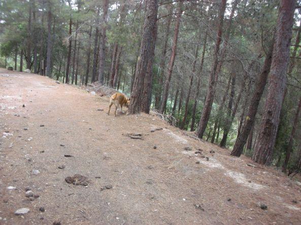 ביער ביער
