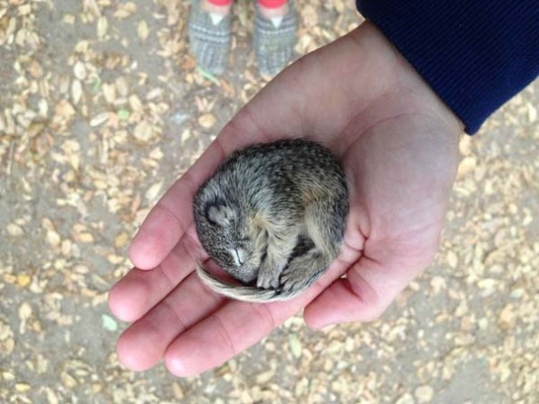 He Found a Frozen Baby Squirrel. Then, He Rescued Him.