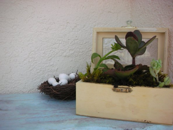 סוקולנטים בתיבת עץ