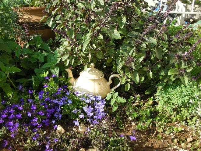 קומקום וערוגה ססגונית של צצמח מרפא ופרחים