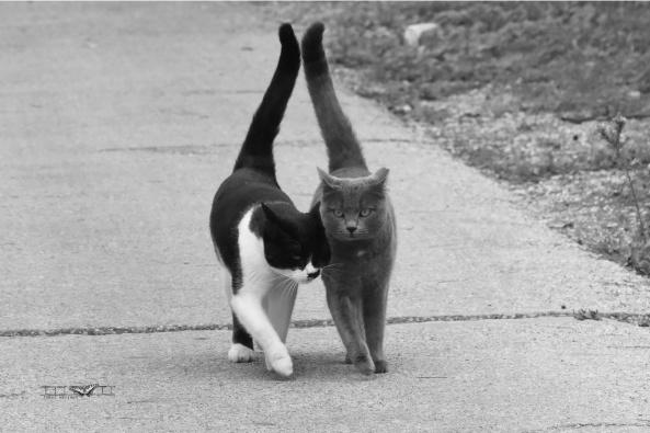 החתולים של בוזי